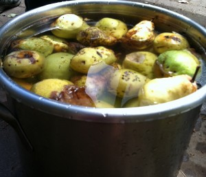 Pears in a pot